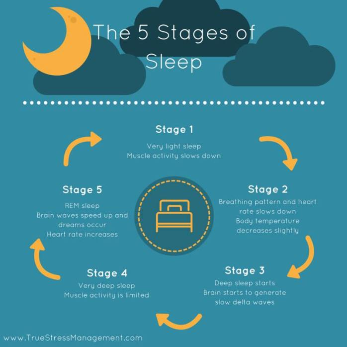 5 stages of sleep chart